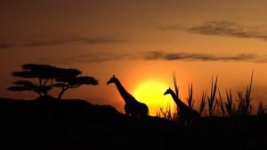 Afbudsrejser til Afrika